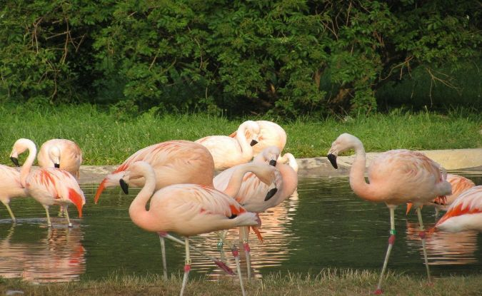 Aves migratorias: ¿Aves sin fronteras?