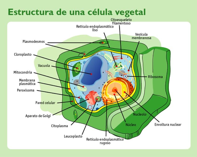 Células eucariotas