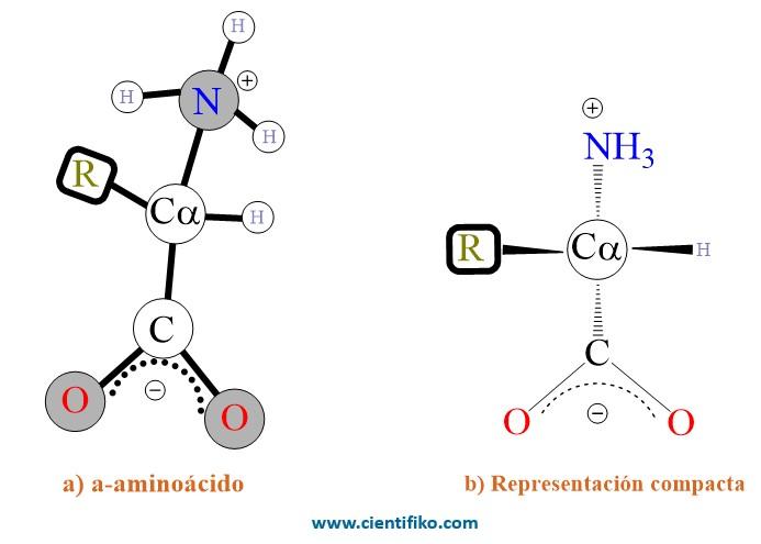 Estreoquimica de los aminoacidos