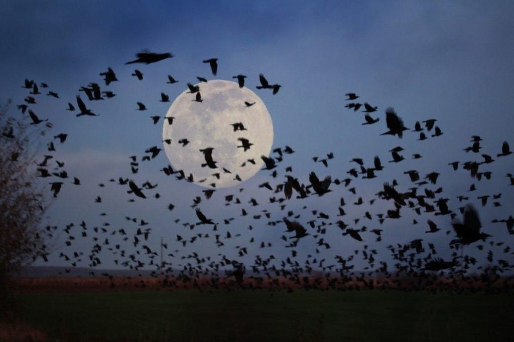 Influencia lunar sobre el ser humano