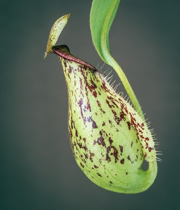 Plantas carnivoras cientifiko.com