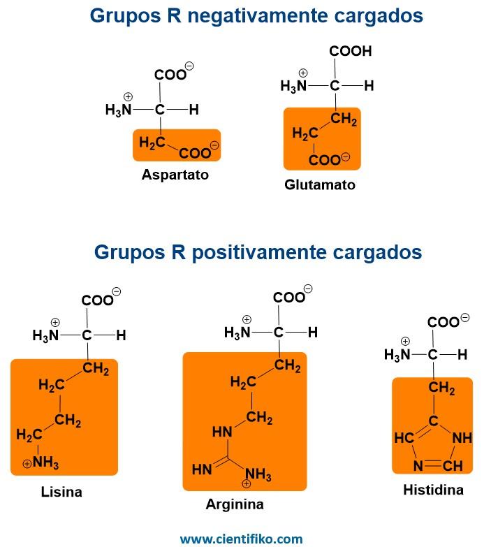 aminoácido polares cargados