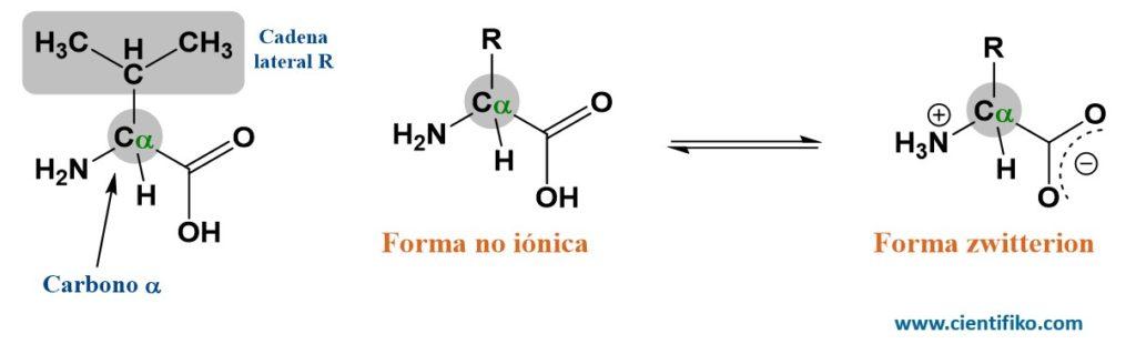 aminoácidos cientifiko