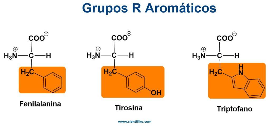 aminoacidos aromáticos