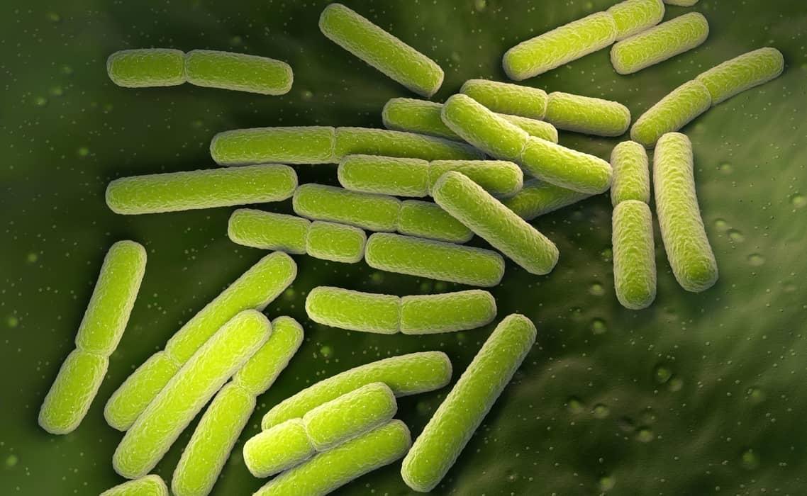 células procariotas