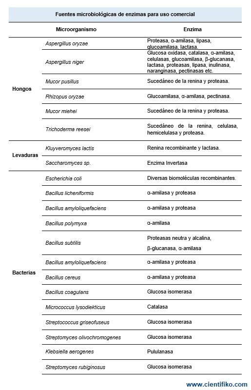 fuentes de las enzimas en la vida diaria