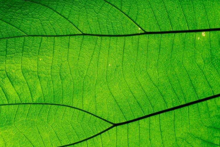 reacciones quimicas fotosintesis clorofila