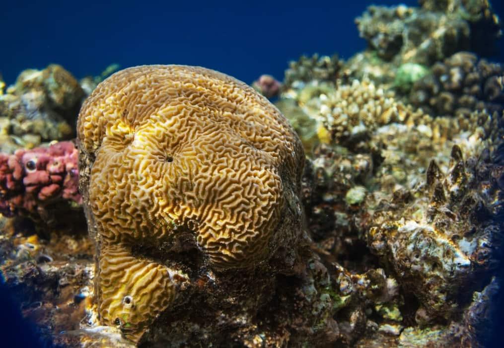 arrecifes de coral planeta tierra
