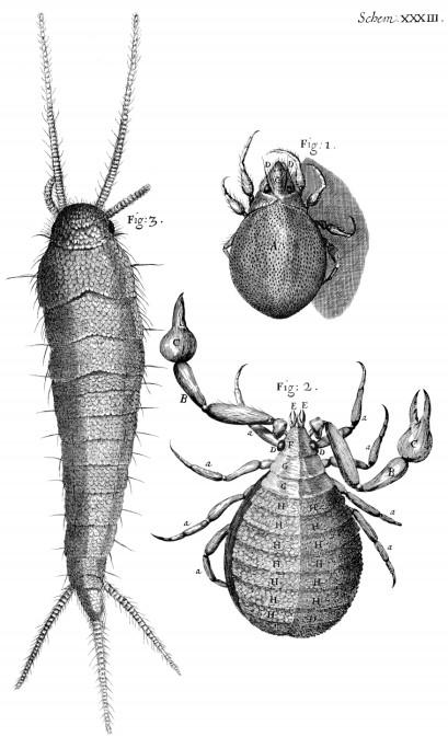 Robert Hook observación microscópica de acaros