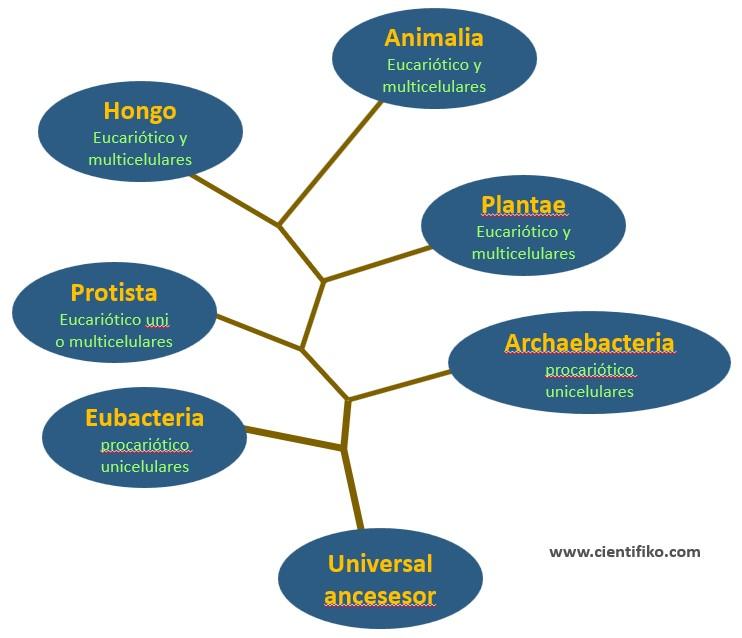 sistemas de clasificacion taxonomicas