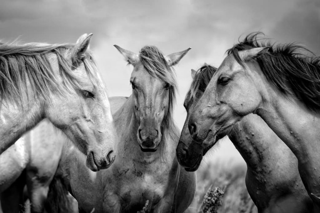 Seres vivos caballos cientifiko.com