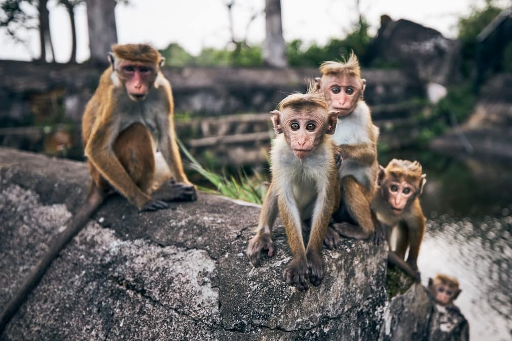 Seres vivos primates cientifiko