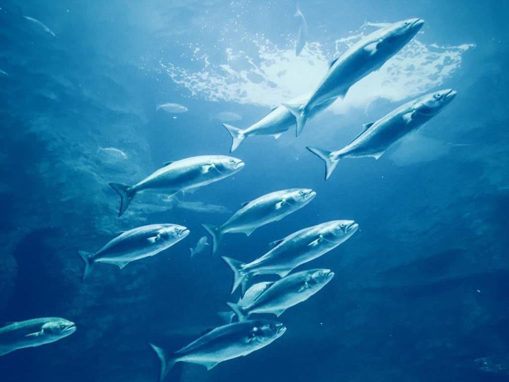 Seres vivos peces cientifiko