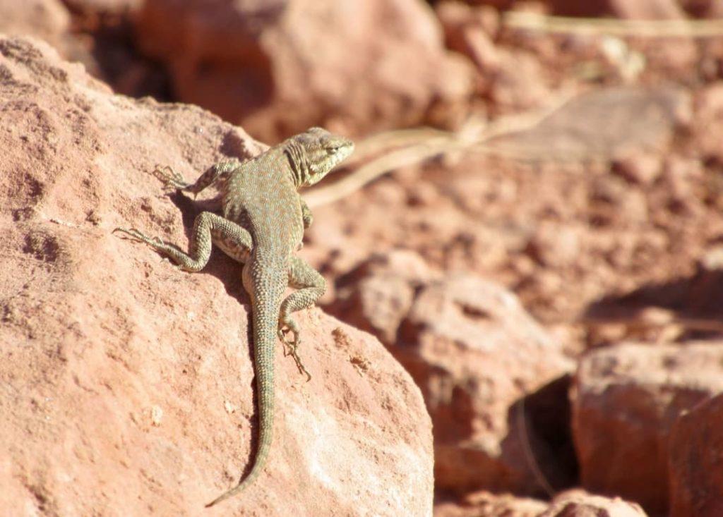 animales en los desiertos