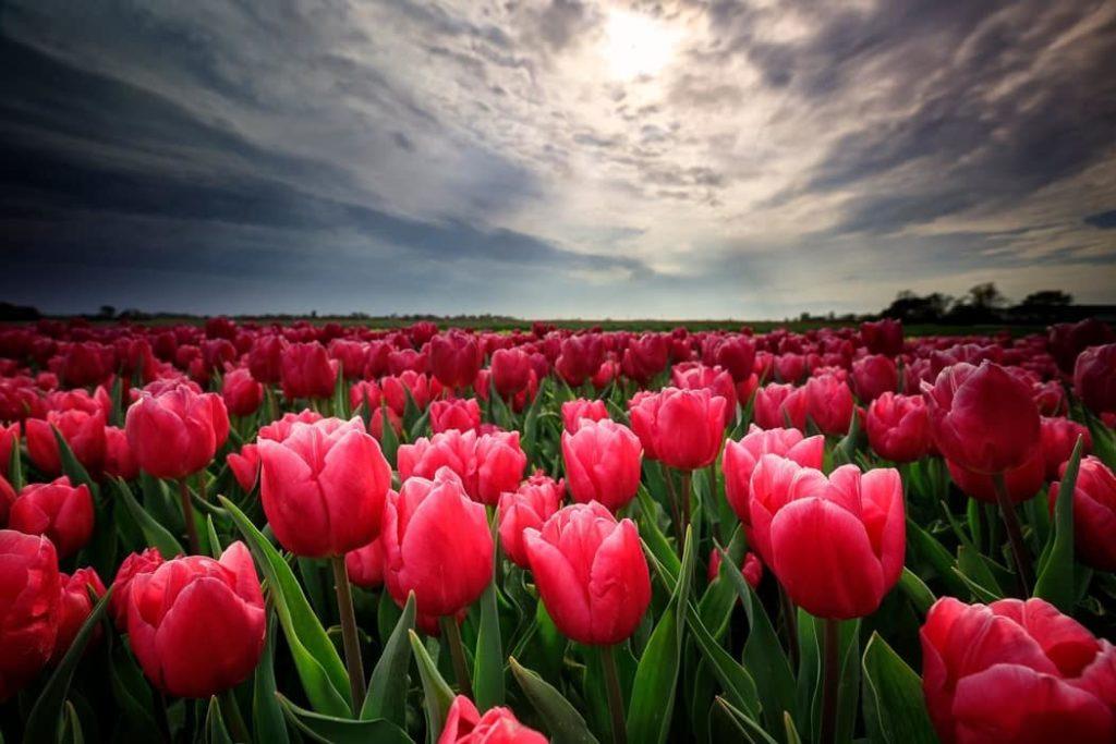 flores en la tierra cientifiko.com