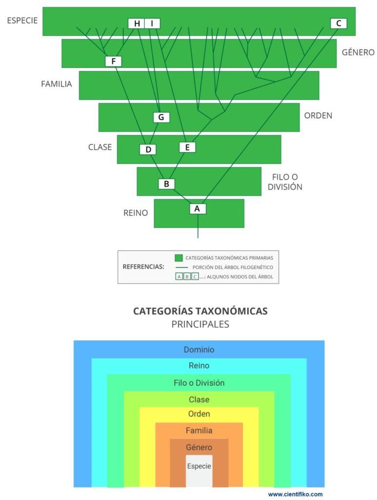Categoria taxonomica cientifiko.com