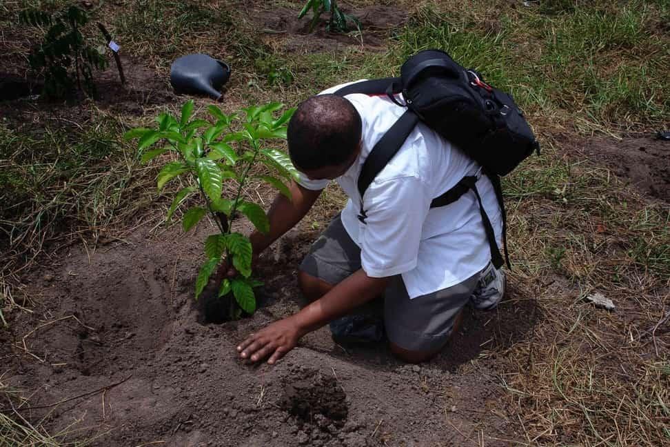 reforestación del planeta tierra