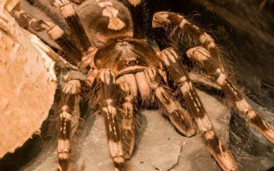 Las arañas: ingenieras prodigiosas