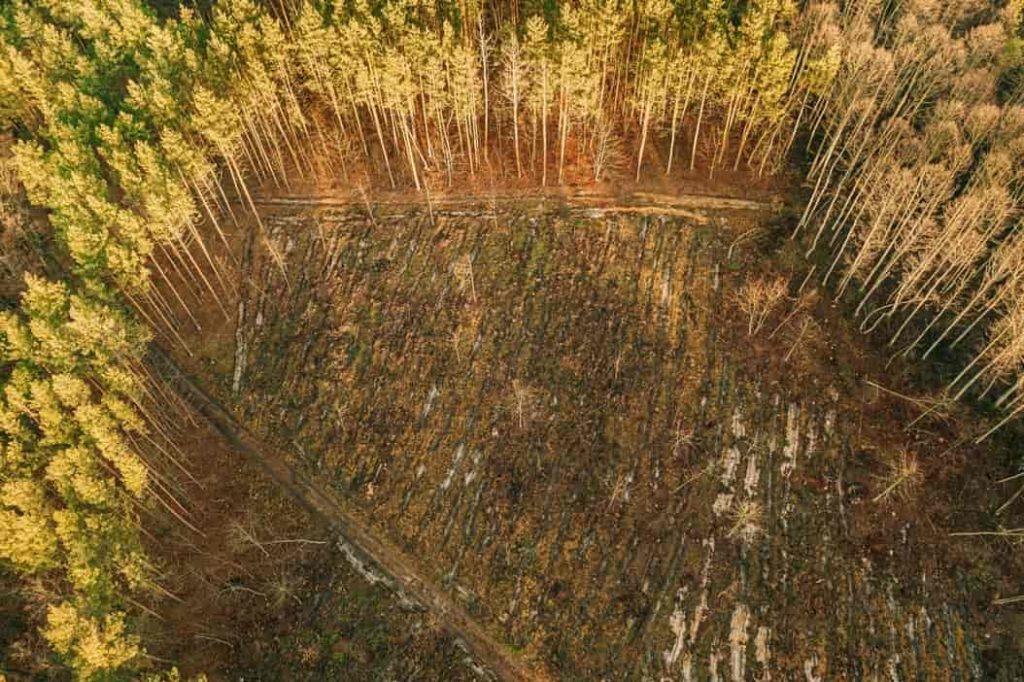 Calentamiento global deforestacion
