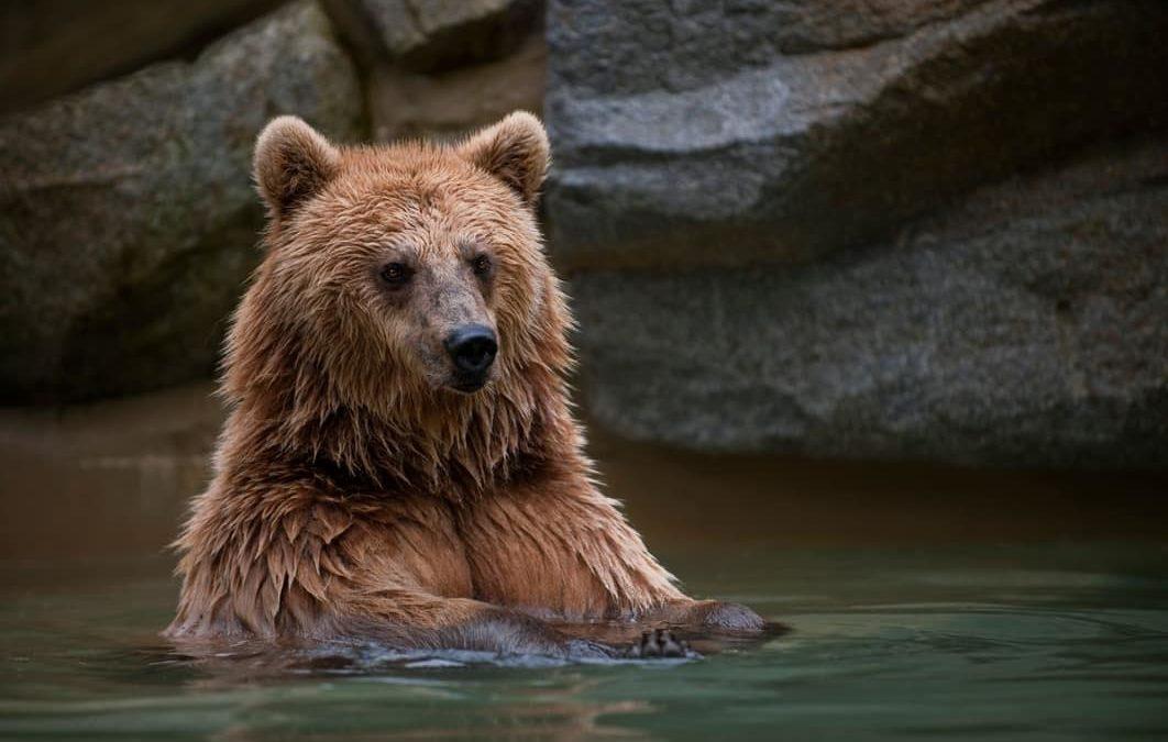 Un grandioso mundo de osos