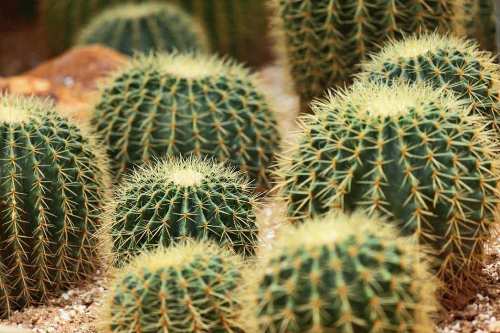 Plantas del desierto cientifiko