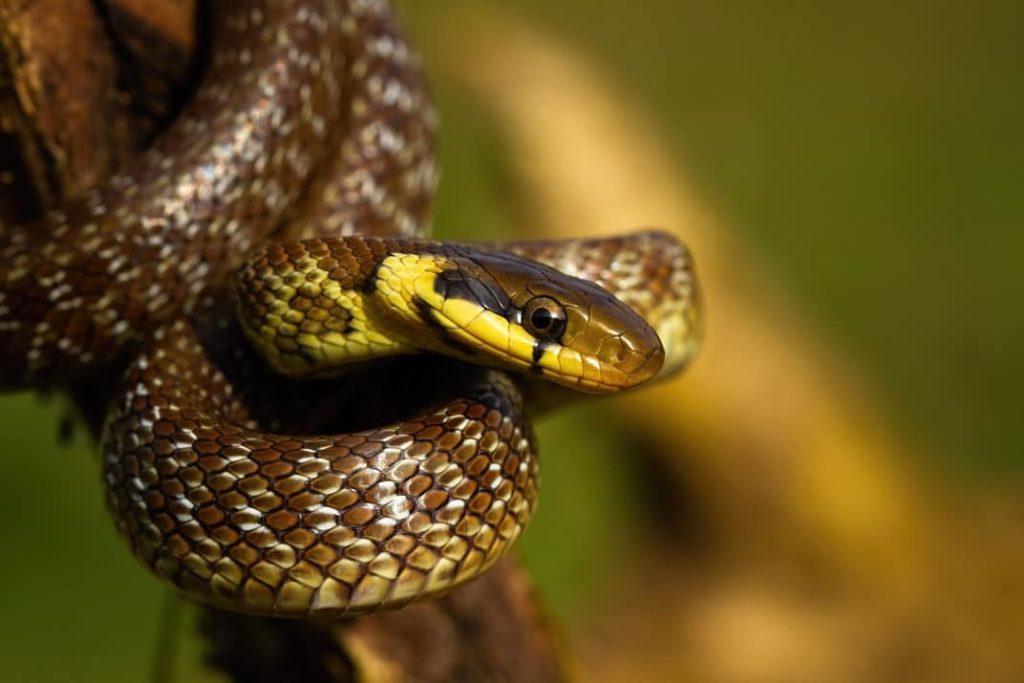 Serpientes cientifiko
