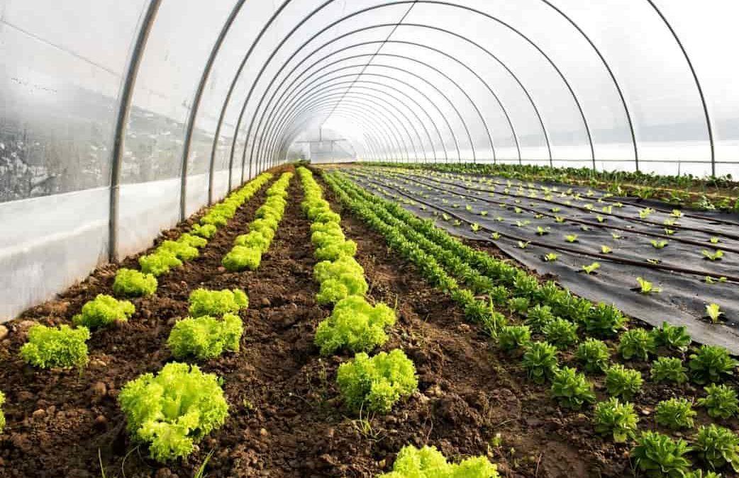 ¿Cómo ha sido la evolución de la agricultura en el mundo a través del tiempo?