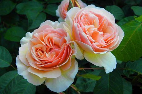 Flores más comercializadas