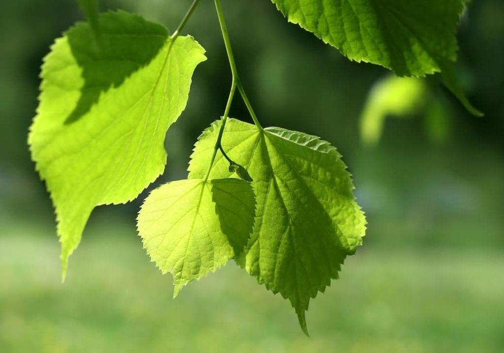 Hechos fascinantes sobre la fotosintesis