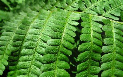 7 hechos fascinantes sobre la fotosíntesis