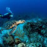 Las tortugas: todo lo que debes saber de esta curiosa criatura