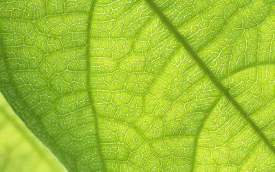 Términos y definiciones del vocabulario de la fotosíntesis