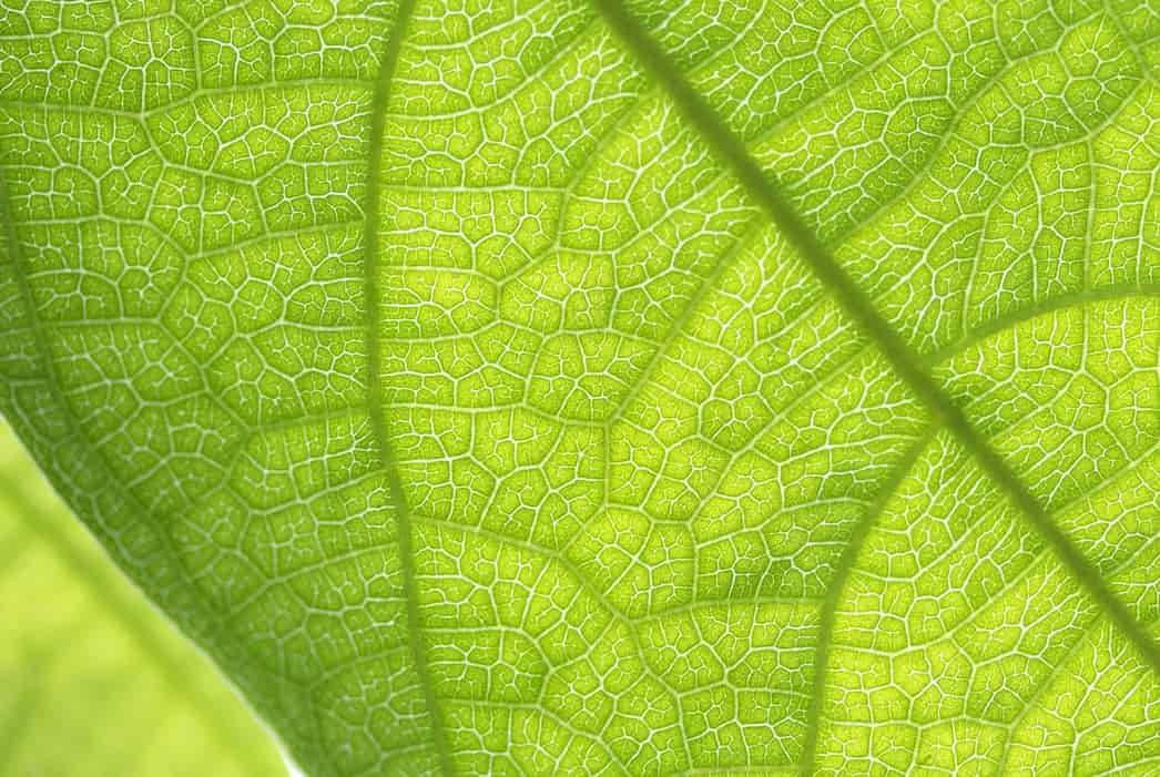 Vocabulario de la Fotosintesis