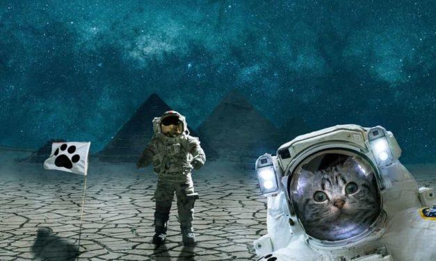 La historia de los animales en el espacio