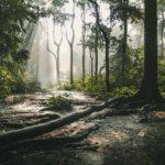 Los bosques del mundo: extensiones eventualmente predominantes