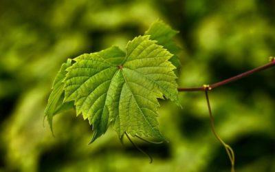 ¿Cuáles son los productos de la fotosíntesis?