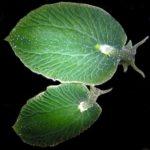 ¿Hay algún animal que pueda realizar la fotosíntesis?