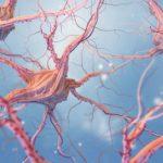 Conoce los neurotransmisores y su gran actividad