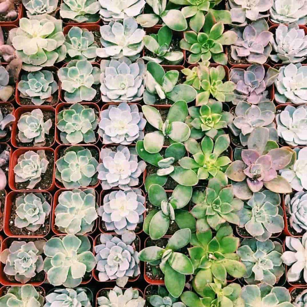 curiosidades de las plantas