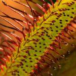 26 curiosidades de las plantas más extrañas
