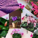 Conozca las flores que florecen todo el año