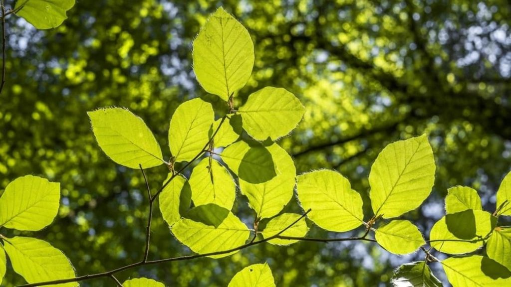 Fórmula de la fotosíntesis